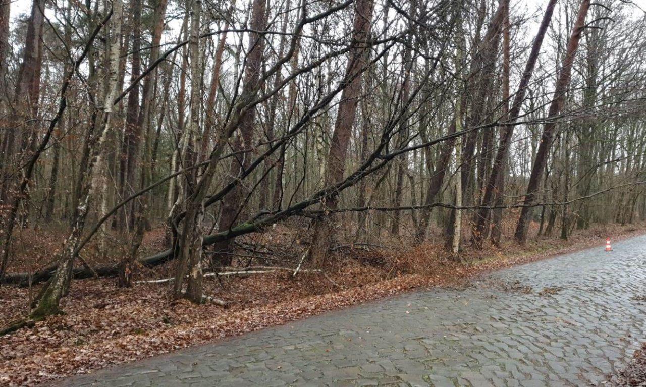 Baum auf Straße - Alter Postweg Altwarmbüchen